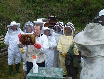 Bees-034SM