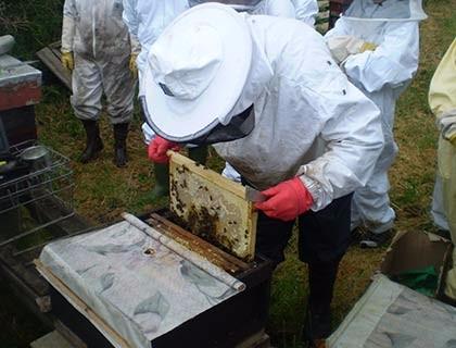 Bees-039sm
