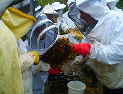 Bees-049sm