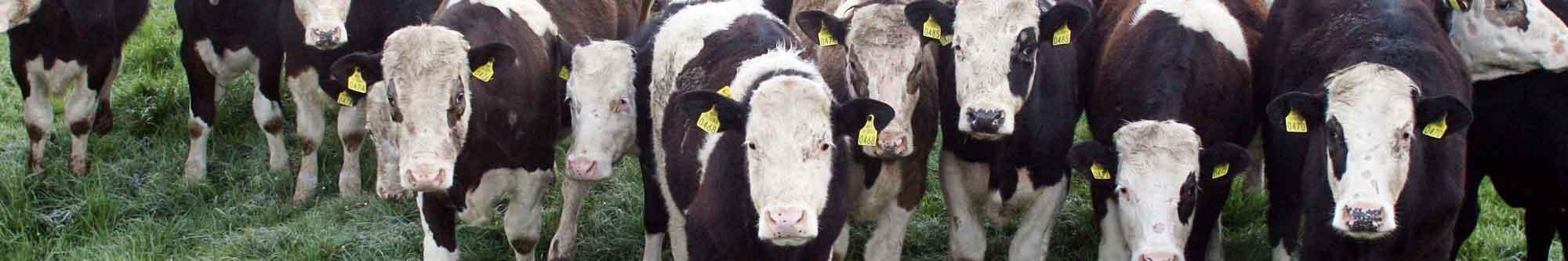 focal farmer - IRD Duhallow